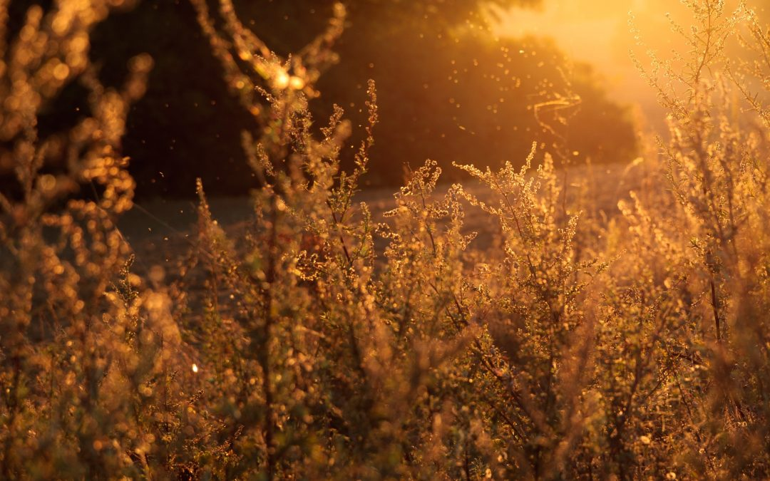 Allergy Season Is Here: Learn How Acupuncture Can Help Your Allergies